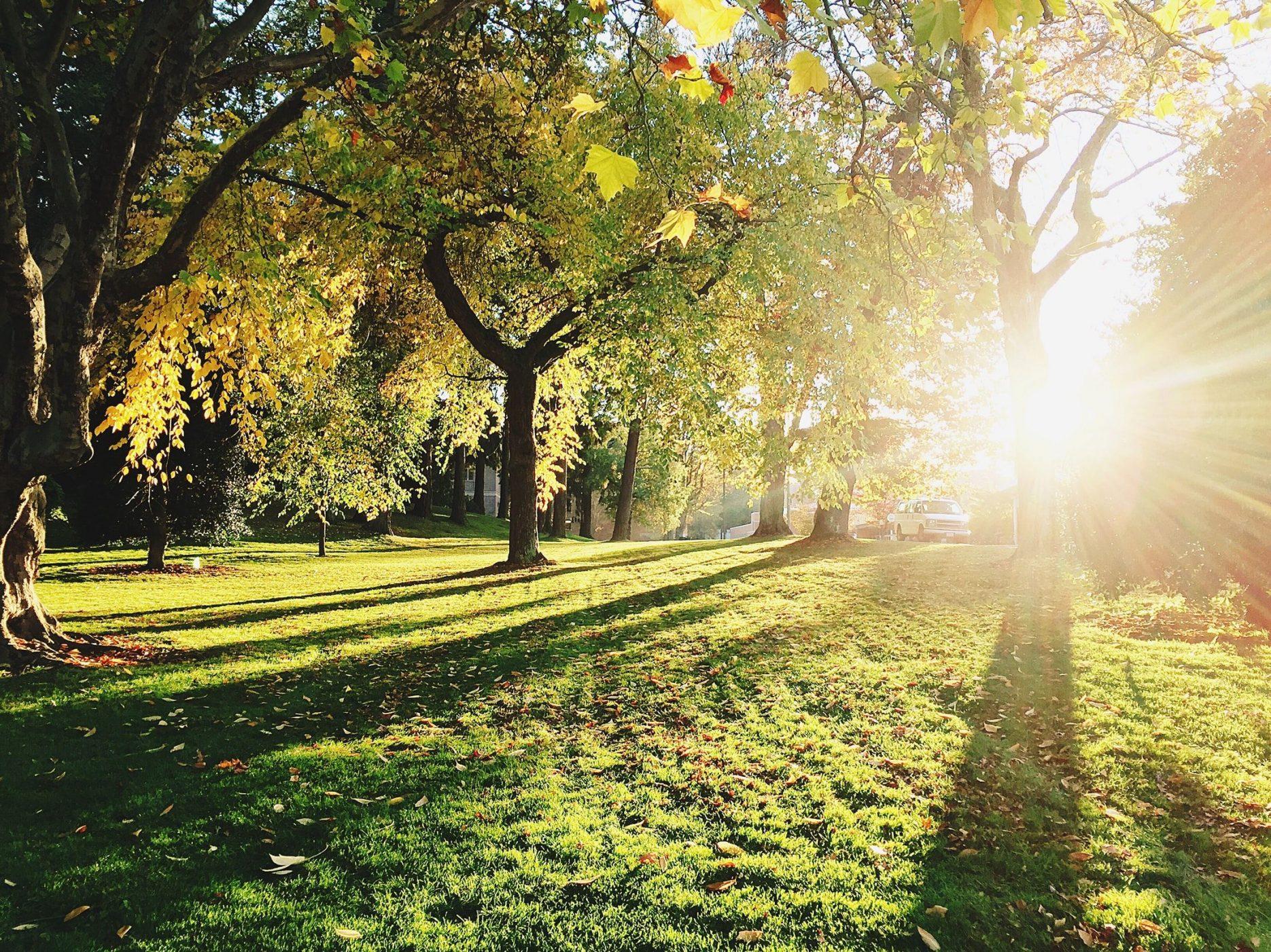 Bomen met zon